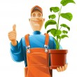 Gardener with plant in flowerpot — Stock Vector