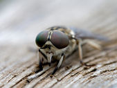 Little insect — Stock Photo