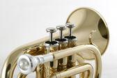 Golden pocket trumpet — Stock Photo