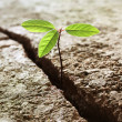 Sprout growing out of concrete - Stockfoto
