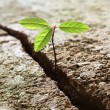 Sprout growing out of concrete — Stock Photo
