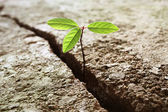 Sprout growing out of concrete — Foto Stock