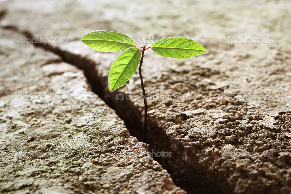A young plant growing out of concrete. Concept of business break through  Stock Photo #5868057