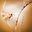 Golden bee — Stock Photo