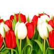 Bouquet of  tulips on white background - flowers - Stock Photo
