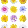 Stock Photo: Flowers set