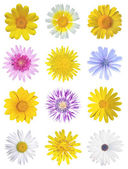 Flowers set — Stock Photo