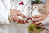Wedding doves — Stock Photo