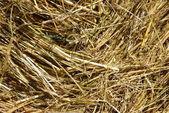 Hay in the sunshine — Stock Photo