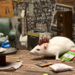 Room for punk mouse - Stock Photo