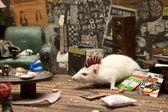 Prostor pro punkové myš — Stock fotografie