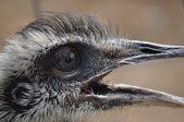 Uccello sta guardando — Foto Stock