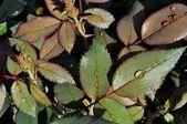 Textura zelených listů — Stock fotografie