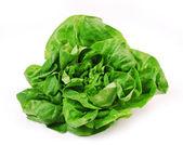 Fresh green salad on white background — Stock Photo