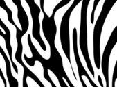 Vector zebra texture Black and White — Stock Photo