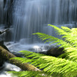 Stock Photo: Water fall in forest