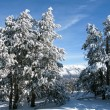 Stock Photo: Snowy forest