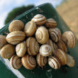 Land snails — Stock Photo #5886620