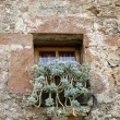 Foto Stock: Window and plants