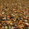 Forest floor in autumn — Stock Photo