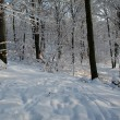 Snowy forest — Stock Photo #5886931