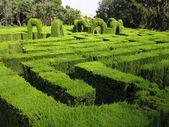 Hedge maze — Stock Photo