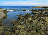 Intertidal rock platform — Stock Photo