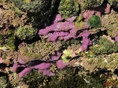 Marine sponge, porifera — Stock Photo