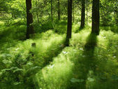 Light and shadow in forest — Stock Photo