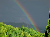 Intense rainbow above forest — 图库照片