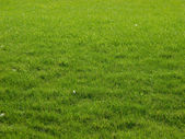 Meadow, gras, green — Stock Photo