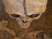 Human skull seen from above — Stock Photo