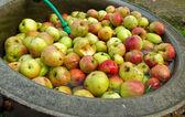 Apples in waterbath, organic farming — Stock Photo