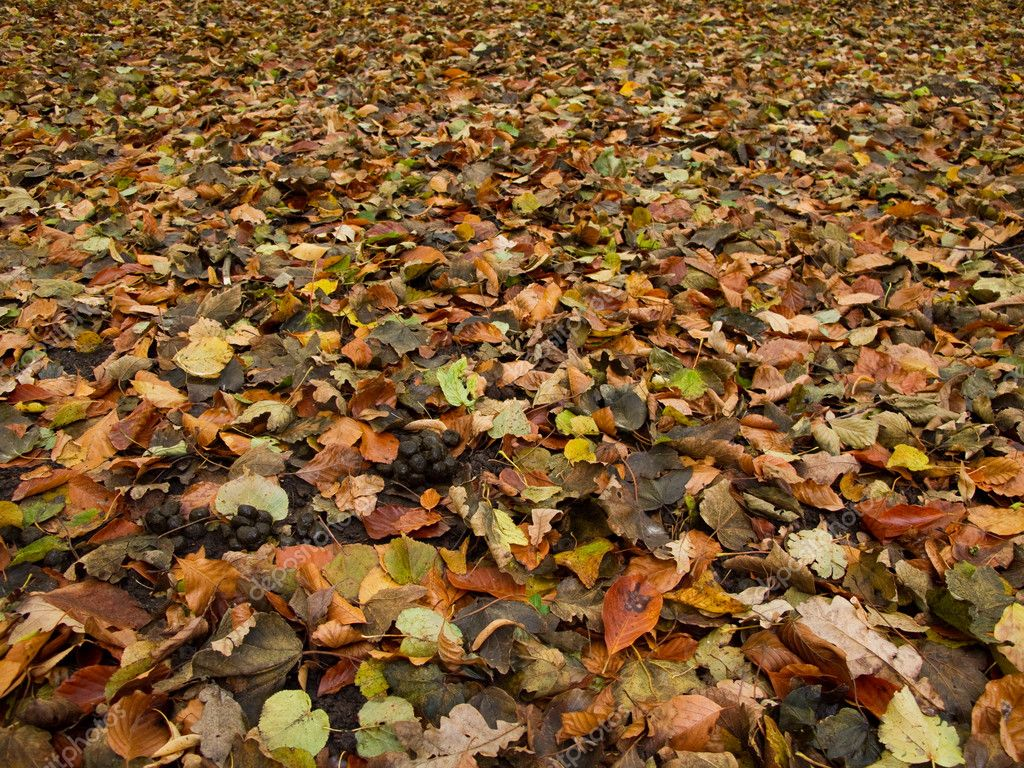 Plantation Floor Plan Forest Floor In Autumn Stock Photo 169 Arrxxx 5886912
