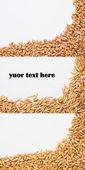 Grain scattered on white — Stock Photo
