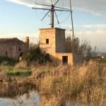 Wind mill Mallorca — Stock Photo