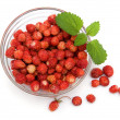 Stock Photo: Wild strawberries