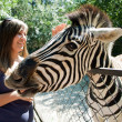 Girl and zebra - Stock Photo