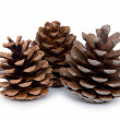 Three Pine cones - Stock Photo