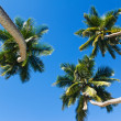 Three palm trees and a blue sky - Stock Photo
