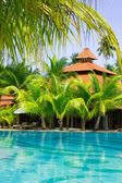 Swimming pool with coconut palm trees, vertical — Stock Photo