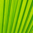Royalty-Free Stock Photo: Green palm tree leaf as a background