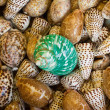 Green  and brown sea shells — Stock Photo