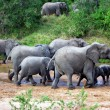 Elephants in river - Stock Photo