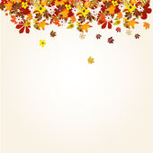 Autumn background with leaves — Stock Photo