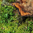 Tree stub in the grass — Stock Photo