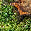 Tree stub in the grass — Stock Photo #5972914