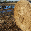 Hay bale and field — Stock Photo