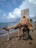 Bole of a dead tree — Stock Photo