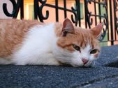 White and red cat — Stock Photo